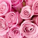 Фото - Что скажут о твоём характере любимые цветы?