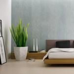 Фото - Полезные комнатные растения
