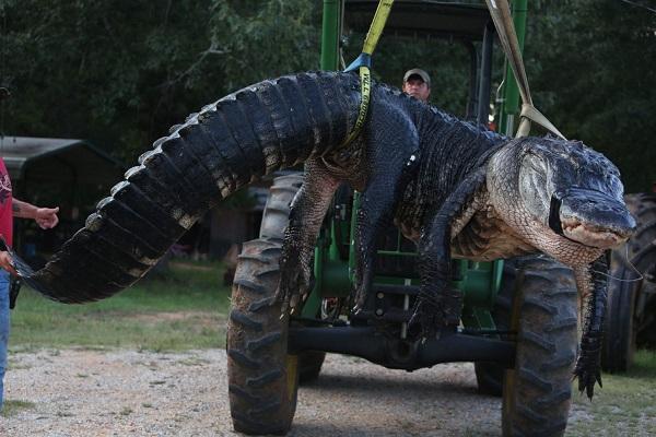 Крокодилище 1