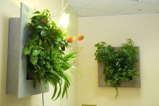 Живые картины из растений - своими руками.