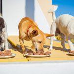 Правильные консервы для собак